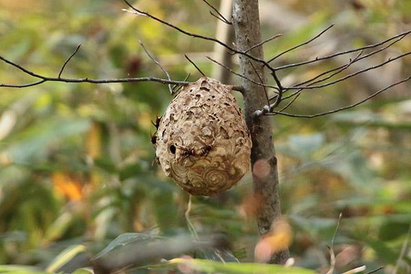 蜂の巣-1